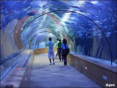 L'Oceanografic Museum  Valencia, Spain