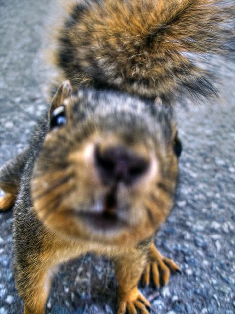 "squirrel!  ""Move that corncob a little bit closer and I'll give you a real photo bomb!"""