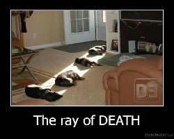 Death Ray Funny Cats Sleeping In the Sun - Funny Animal Pictures With Captions - Very Funny Cats - Cute Kitty Cat - Wild Animals - Dogs