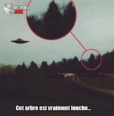 Cet arbre prouve l'existence des aliens ! - Be-troll - vidéos humour, actualité insolite