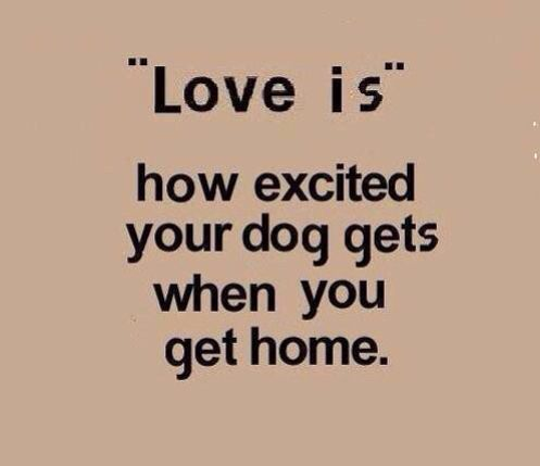 It's true. Everyday the same level of excitement. | Quotes About Dogs | Pinterest | Dogs, Pets and I love dogs