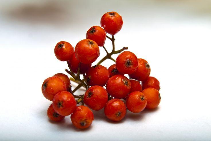 Kostenlose Bilder Beeren Eberesche von www.tOrange-de.com Tags - #Eberesche #reif #Nahrung #Völker #Tinktur #Blätter #Medizin #Niederlassungen #Beere #Scharlachrot #Rot #Noch #Leben #Blumenstrauß #saftig