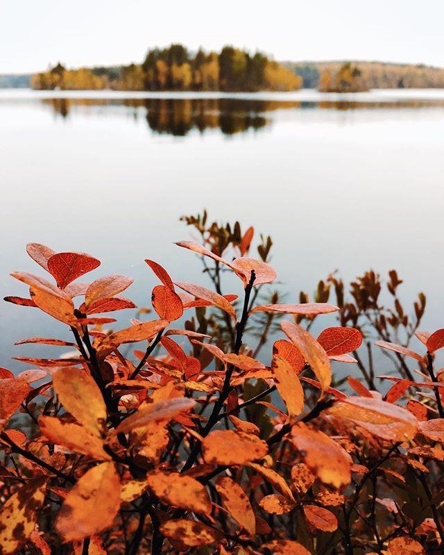 #debrikarelii  #visitkarelia_travel #aviatortour #карелия #karelia #nature #ng #rosphoto #lake