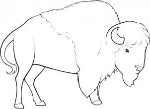 How to Draw a Bison, Step by Step, Great Plain animals