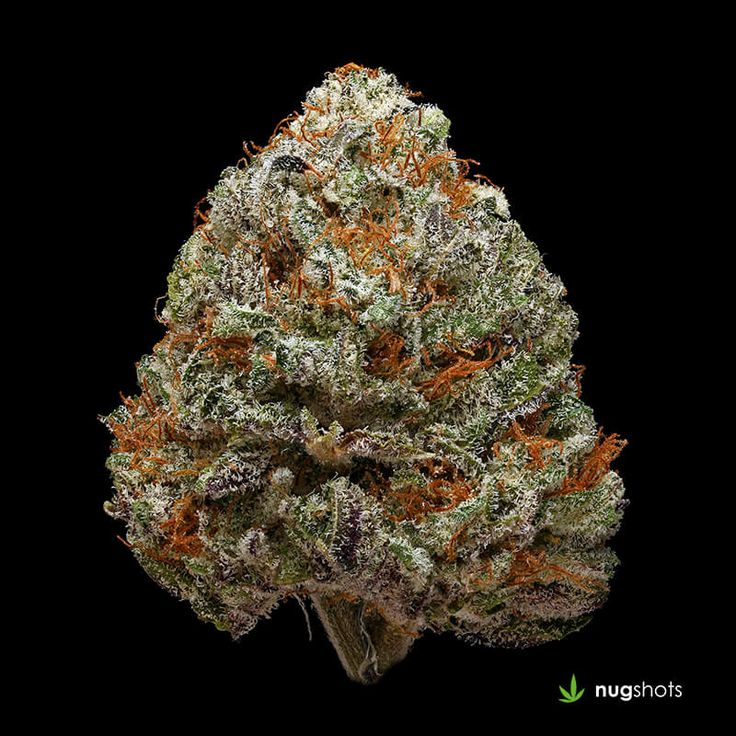 Durban Poison Cannabis Strain A wide variety of the finest Indica, Sativa, and derivative products at a variety of price points to choose from. Our staff is devoted to the consistent selection of unique and rare genetics and the overall quality, you would definitely get your money's worth at weed for sale Props. https://www.orderweedonline4twenty.com/
