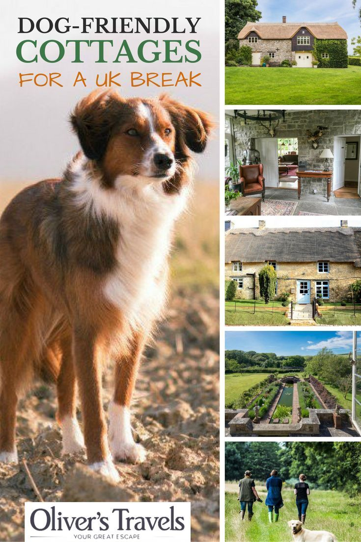 Going Walkies Here Are 10 Dog Friendly Cottages For A Uk Break With Images Dog Friends Dog Friendly Holidays Dog Holiday