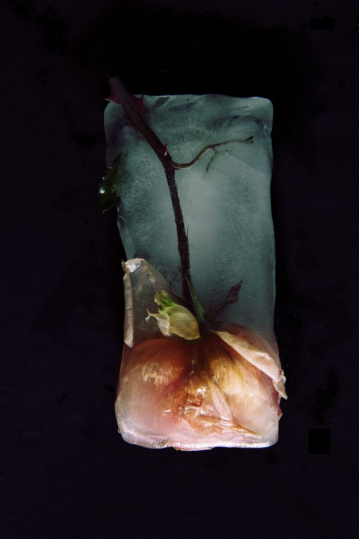 Thinh Dong ~ Frozen roses 4 (Violent and still photo series)