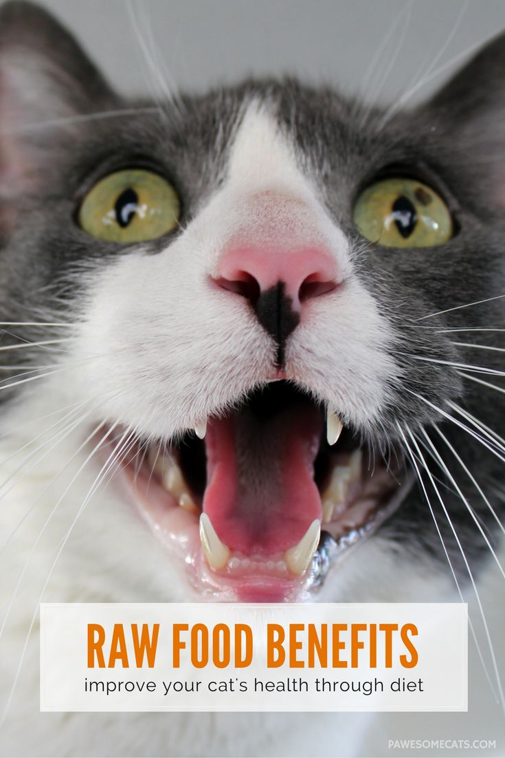 Five Stereotypes About Raw Food Diet For Cats With Ibd
