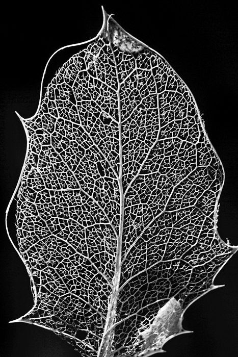 dried leaf. maybe embroider this onto a quilt