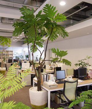 お部屋に一ついかがですか?観葉植物の持つ癒しの効果とは!の画像