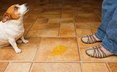 Como tirar o cheiro de urina de cachorro? Qual a melhor forma de remover pelos de gatos e cachorros? Confira as dicas de higienização pra quem tem pet