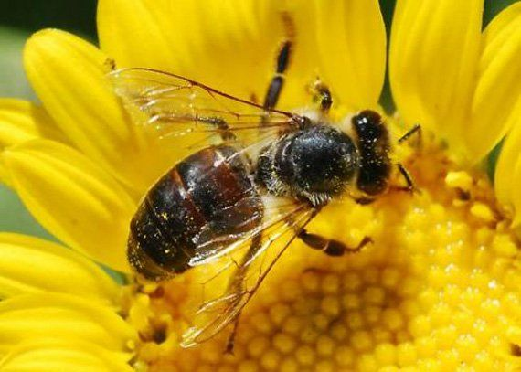 Over 30 Million Bees Found Dead In Elmwood Canada – Collective Evolution