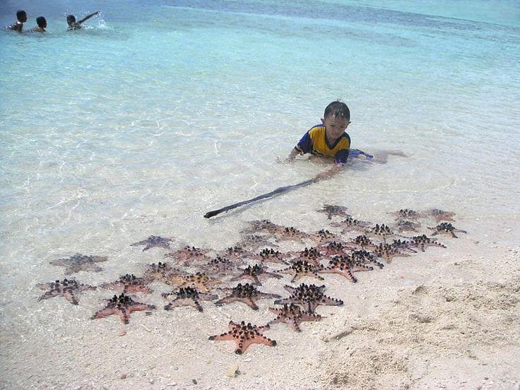 Un enfant garde sa collection d'étoiles de mer sur le sable blanc de Bunaken, en face de Manado. L'étoile de mer à cornes est une espèce d'étoile de mer tropicale couverte de petites cornes noires. Mesurant en moyenne quinze centimètres de diamètre, elle vit sur les fonds sableux non loin des plages.