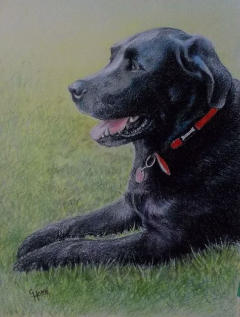 Colour Pencil Drawing by..Greg Hand