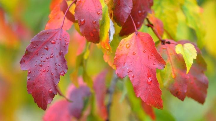 Foglie di autunno.