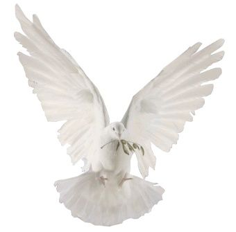 dove of peace.  So beautiful....