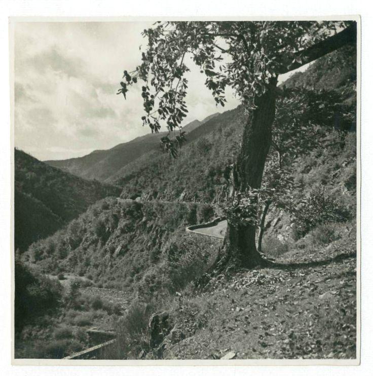 L ALBERO SOLITARIO.Foto d Epoca Old Photo 1930 Vintage Natura Paesaggi F266