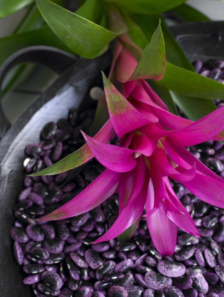 25 best Bromelia designed by mother nature images on