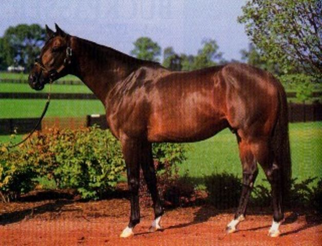 Risen Star. Born 1985. Won Preakness and Belmont Stakes in 1988. Probably Secretariat's best son. The Sport Horse Show and Breed Database