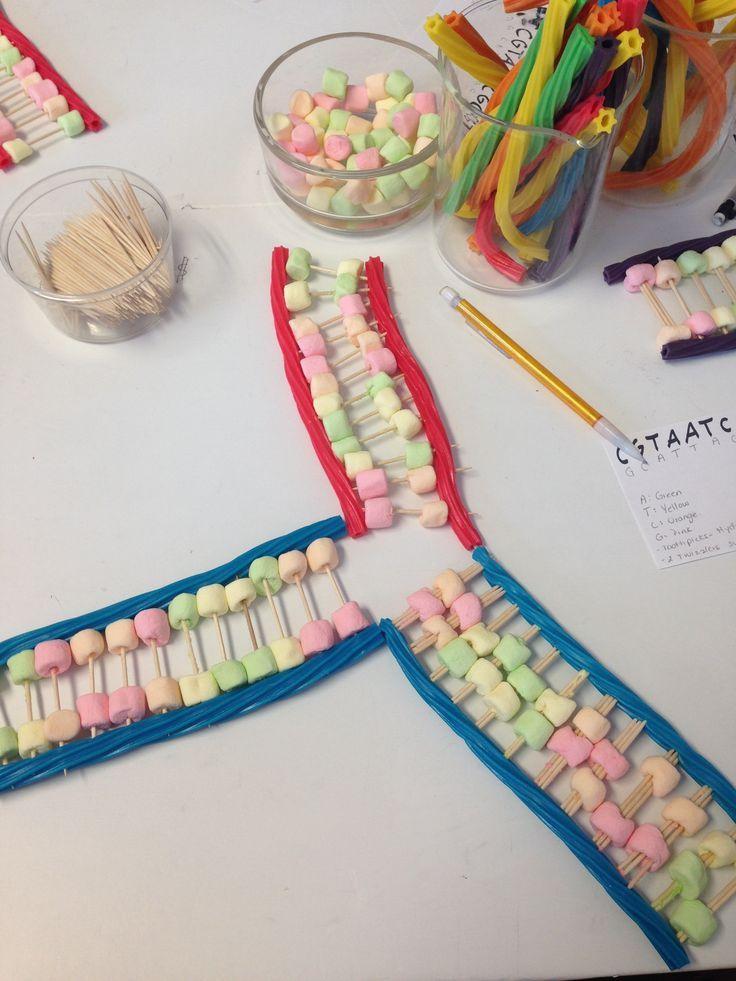 DNA Replication Lab