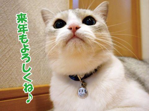 カレンダー!&首輪裏話 |うにオフィシャルブログ「うにの秘密基地」Powered by Ameba