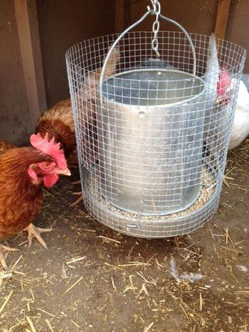 Goat proof chicken feeder, SUCCESS!!!!
