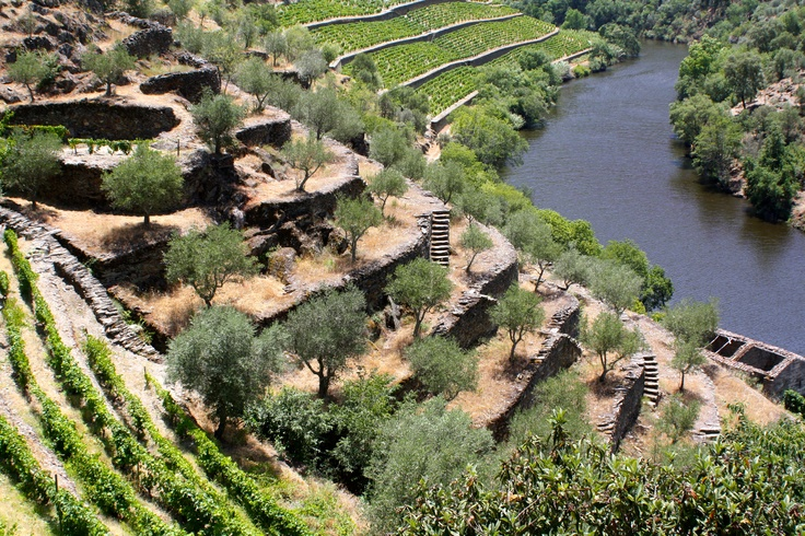 The stunning slopes of the Douro valley in northern Portugal.