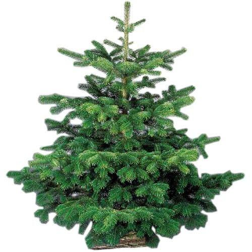 BLOOMTRADE : Découvrez BeBloom.com, la livraison à domicile de votre sapin de Noël Nordmann avec son socle bûche prêt à l'emploi