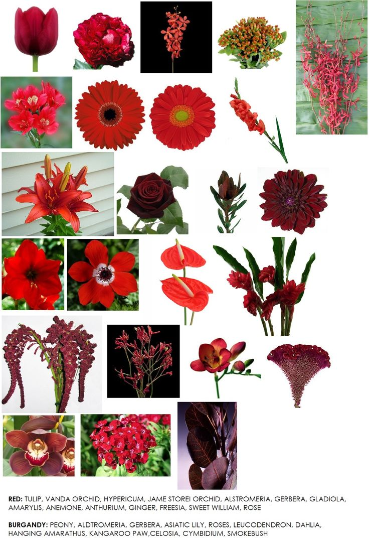 Fifth In Our Series On Color – Red | Modern Petals Blog
