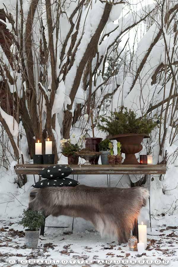love this winter table    from a Swedish blog site  Trädgårdsflow: Årskrönika