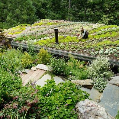 Roof Top Garden: Mills Valley, Rooftops Gardens, Gardens Design Ideas, Yoga Studios, Greenroof, Valley Cabins, Green Roof, House, Roof Gardens