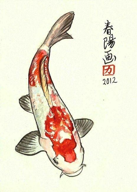 Illustrations by carmen harada watercolors pinterest for Croisement carpe koi poisson rouge