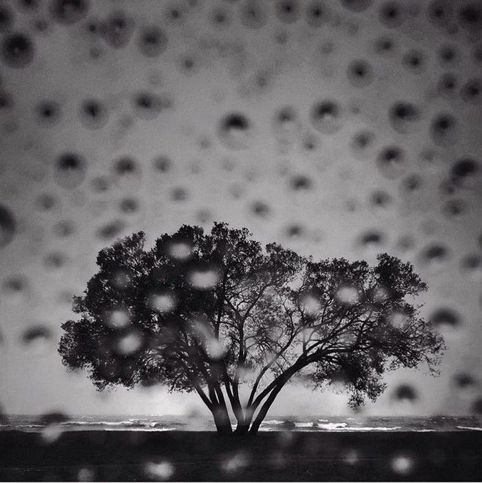 Фотограф снимает одно дерево в течение 2 лет