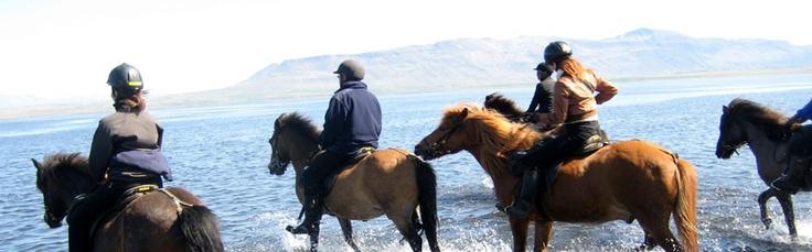 Island - Islandske heste | vulkaner | fossende elve | fascinerende landskab