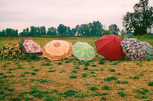 Sunshade on the grass