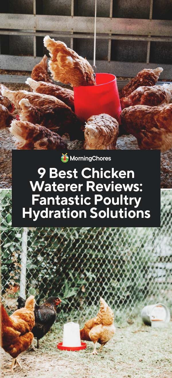 9 Best Chicken Waterer Reviews Fantastic Poultry Hydration Solutions Chicken Waterer Chicken Waterer Diy Chicken Watering System