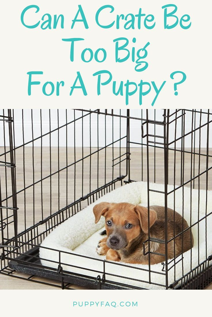 Can A Crate Be Too Big For A Puppy Puppies Puppy Crate Puppy