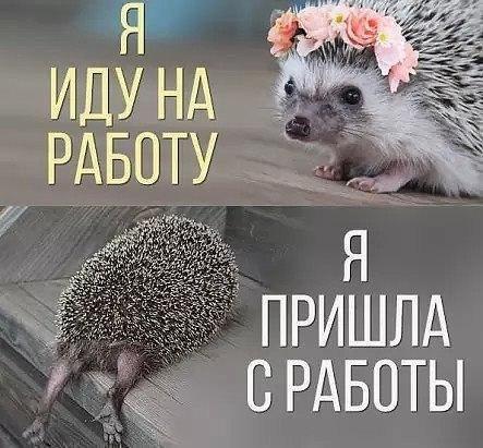 Результат рабочего дня)
