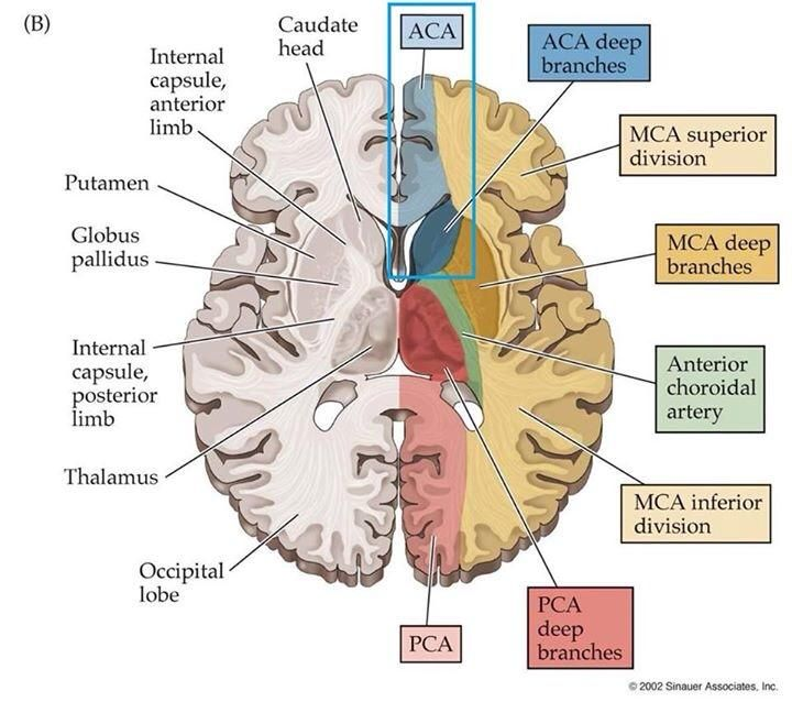 546 best brain art images on pinterest neuroscience the brain and 76 usmle step 1 preparation forum ccuart Image collections