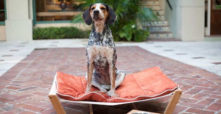 Welcome - Pet Lounge Studios: Modern Pet Furniture and Accessories