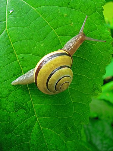 Spiral+Shape+Pictures