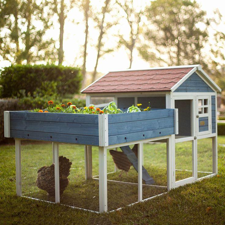 Advantek Rooftop Garden Chicken Coop (2-3 hens)