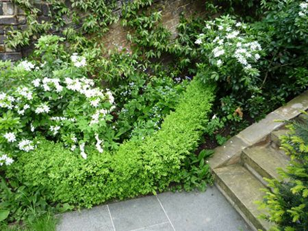 Carlyle Square | Projects | Richard Miers - Garden Design