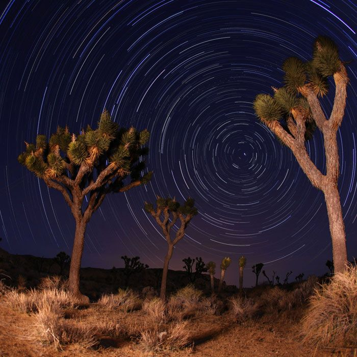 Joshua Tree National Park, California The namesake spikey trees of this park in California's interior look beautiful, and a little eerie, under moonlight. Hiking after dark here is also a much cooler alternative if you're taking on the desert in the broiling summer months.
