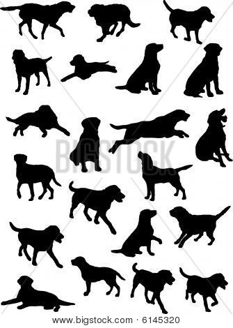 Vector silhouettes of Labrador dog in various poses Picture ...