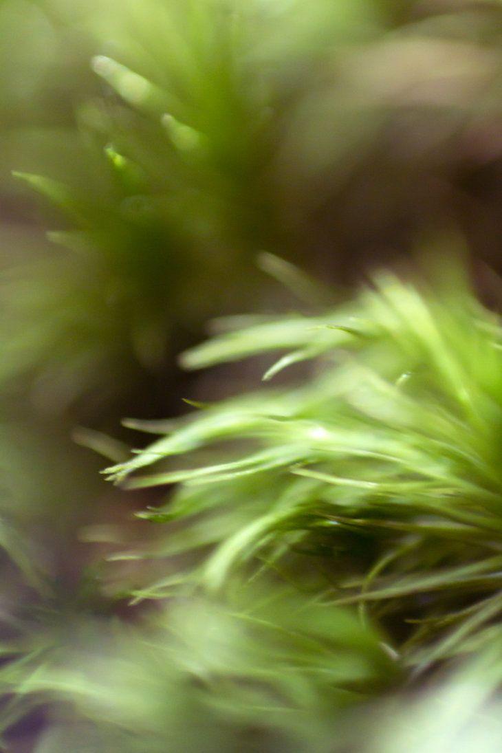Corners by Koujaku (moss)