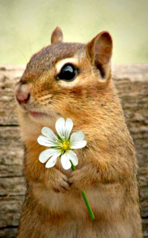 Figured if I picked you a nice flower to express my thanks, you might just put out some more peanuts
