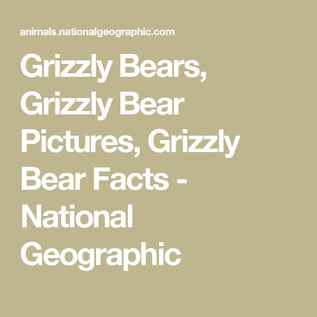 Grizzly Bears, Grizzly Bear Pictures, Grizzly Bear Facts - National Geographic