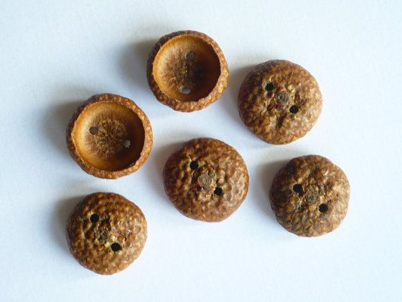 Acorn Cap Buttons lightly coated with natural dalmatian olive oil and beeswax polish.