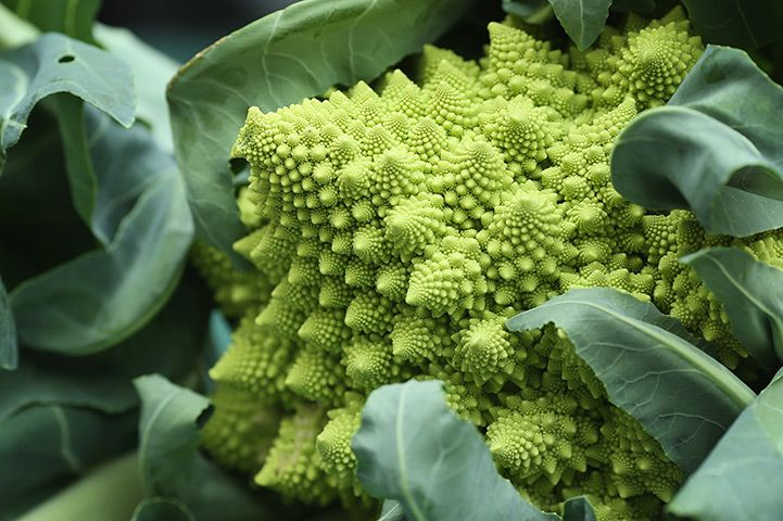 Harvest festival: A Romanesque broccoli is displayed
